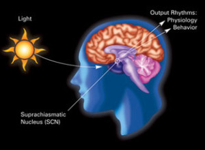 circadian_rhythm_what is light therapy